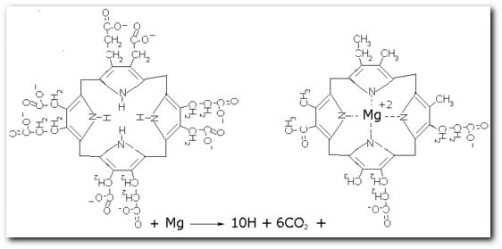 Bacteriochlorophyll biosynthesis. Created with Isisdraw